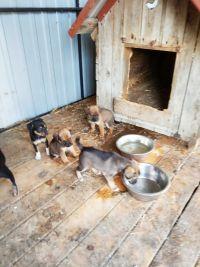 Psy do adopcjii